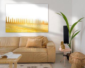 Cipressenlaan met schaduwen, zonsondergang van Rens Kromhout