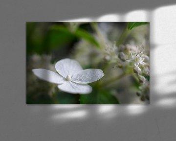 Flower von Purdelicious Photo Made