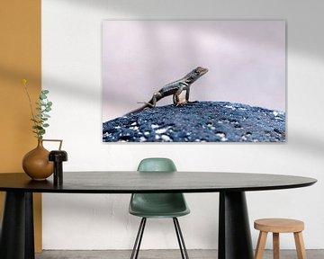 Bladvingergekko von Maarten Verhees