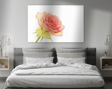 Roos/Rose von Tanja van Beuningen