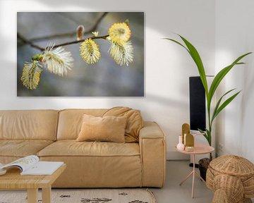 bloeiende wilgenkatjes met gele meeldraden von Hanneke Luit