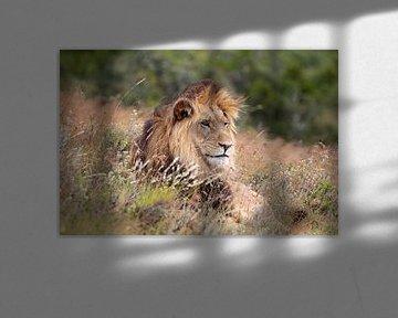 the lion king von gea strucks