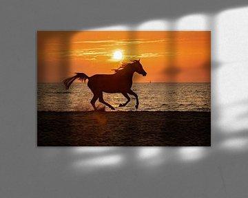 arabier tijdens zonsondergang von gea strucks