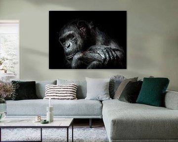 Chimpansee von Karin vd Waal