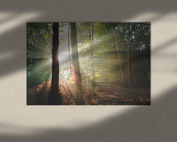 Sfeerimpressie: Hoop en kracht in het bos van Peter Nolten