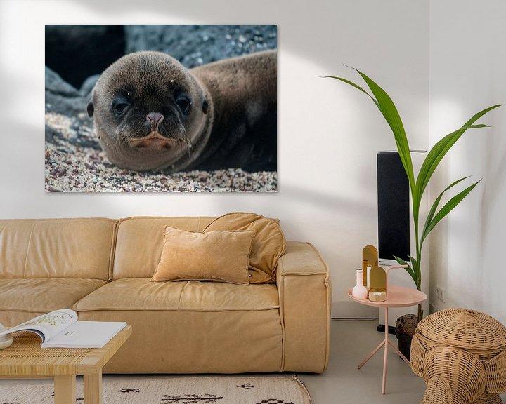 Sfeerimpressie: Galápagoszeeleeuw van Maarten Verhees