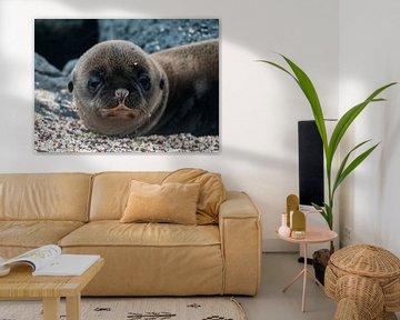Galápagoszeeleeuw van Maarten Verhees