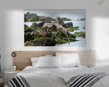 Bruine pelikaan von Maarten Verhees