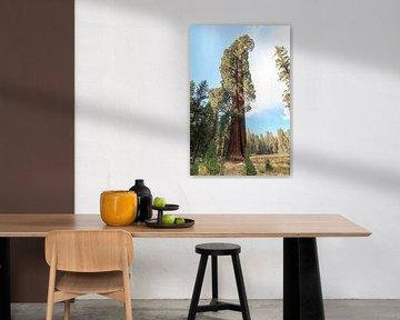 Großer Sequoia-Dendron von Gerben Tiemens