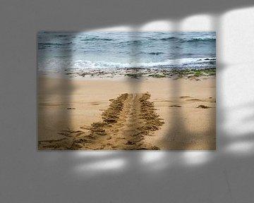 Spoor van een groene Hawaiiaanse zeeschildpad