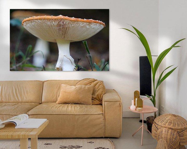 Sfeerimpressie: Vliegenzwam (Amanita muscaria) van Ineke Klaassen
