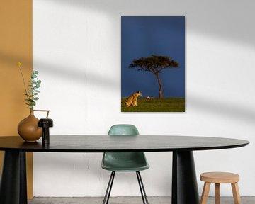 Leeuwin in het vroege ochtendlicht (Masai Mara, Kenia) van Evert Doorn