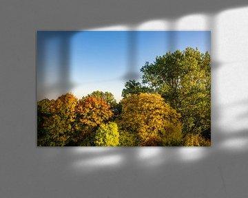 Herbstlich gefärbte Bäume mit blauen Himmel von Rico Ködder