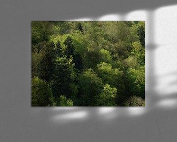 bossen in Duitsland von Mirjam van Ginkel