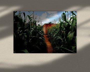 Pad door maisveld in Afrika