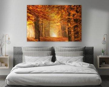 Het gouden licht van een bos in de herfst