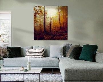 Rainwood - October Forest