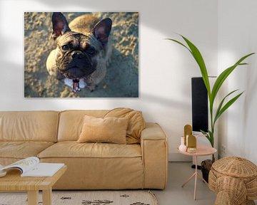 Franse bulldog van Mike Scheper