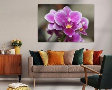 Close up van de Orchide van Mike Scheper