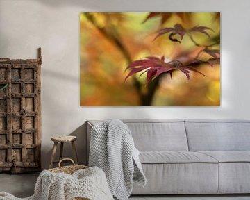 Maple leaf van D. Henriquez