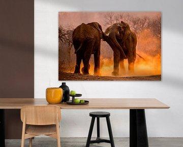 Afrikaanse Olifant, African Elephant, Loxodonta africana van AGAMI Photo Agency