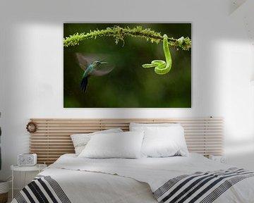 Groengele Groefkopadder, Side-stripe Palm-pitviper, Bothriechis sur AGAMI Photo Agency