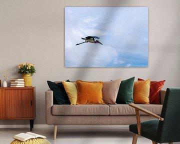 Afrikaanse maraboe van Maarten Verhees