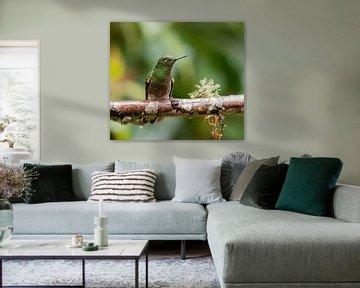 Bruinstaarthoornkolibrie von Maarten Verhees