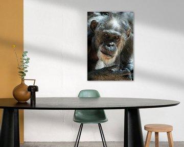 Een chimpansee von Jolanta Mayerberg