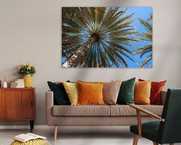 Palmboom van Jeroen Kleiberg