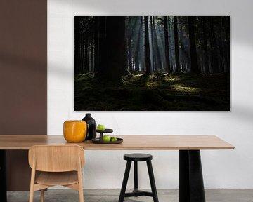 Zonnestralen in het donkere bos von Bjorn Dockx