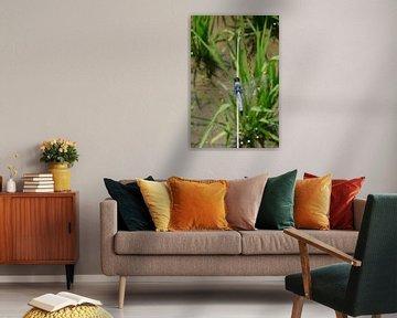 Libel tussen de rijstplanten van Sylvia Bastiaansen