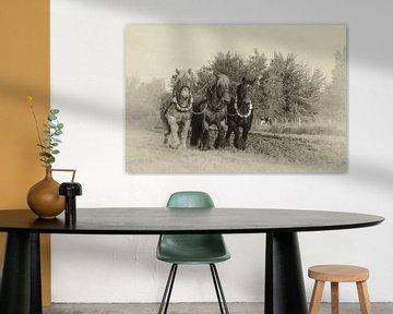 Charrues à chevaux de trait sur Bram van Broekhoven
