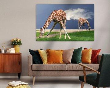 Giraffe von Artstudio1622