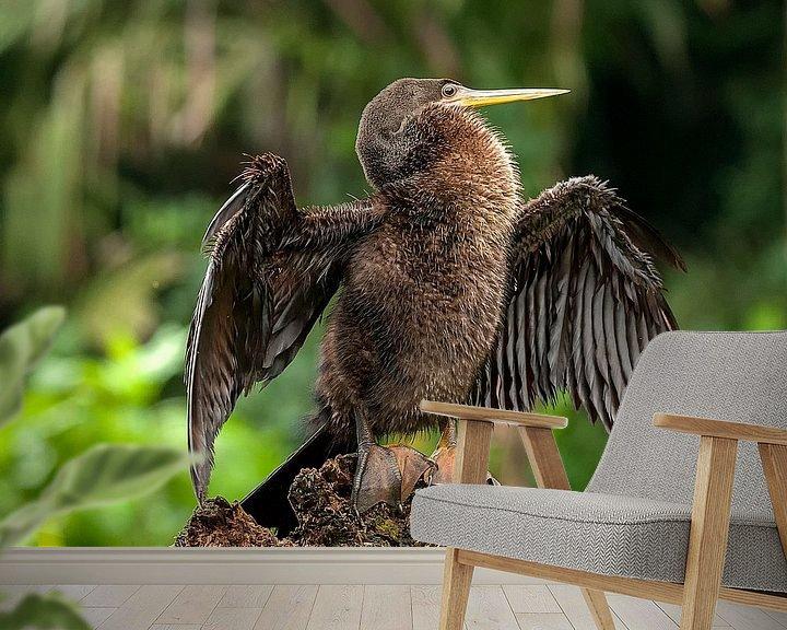 Beispiel fototapete: Anhinga anhinga von Maarten Verhees