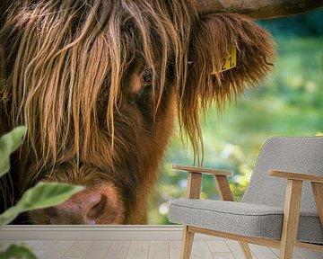 Schotse hooglander van Erica Kuiper