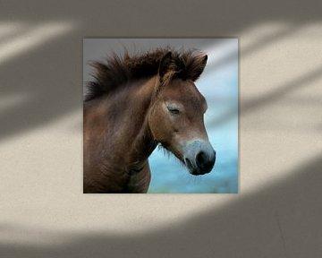 pony van Birgitta Tuithof