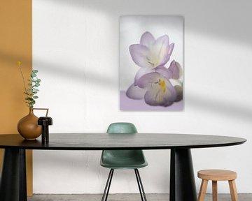 Lila bloem von Birgitta Tuithof