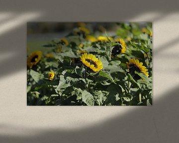 Veld met zonnebloemen von Cora Unk