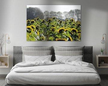 Zonnebloemen met hun hoofd naar de zon. von Cora Unk