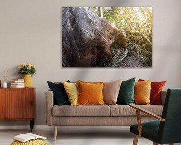 Liebesbankweg  mit Blick in den Wald und Baumstumpf im Sonnenlicht van Dirk Bartschat