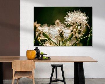 Pusteblume im Herbst van Dirk Bartschat