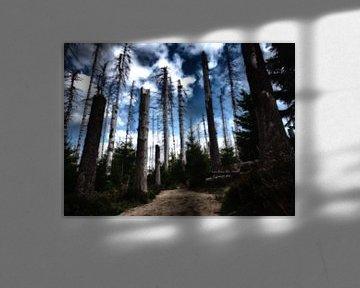 Mystischer Waldfriedhof im Harz van Dirk Bartschat