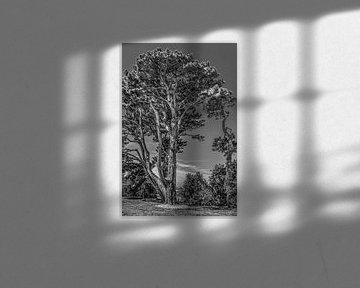 Een grove denneboom aan de Bretonse kust in zwart wit von Harrie Muis