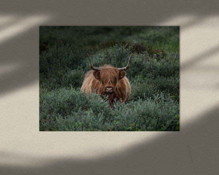 Sfeerimpressie: Schotse Hooglander van Patrick Verheij