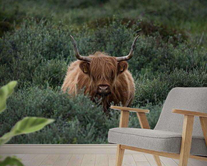 Sfeerimpressie behang: Schotse Hooglander van Patrick Verheij