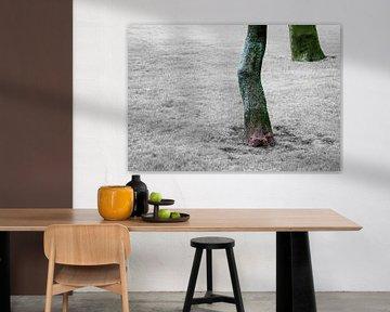 elephant feet van Artstudio1622