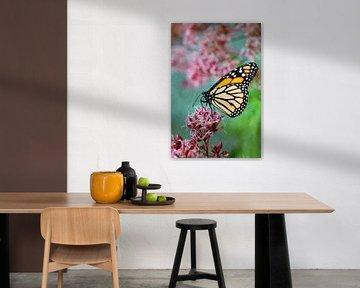 Bewerkte foto van een vlinder op een bloem van W J Kok