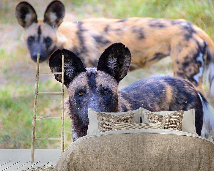 Sfeerimpressie behang: De Afrikaanse wilde hond van Eline netnas