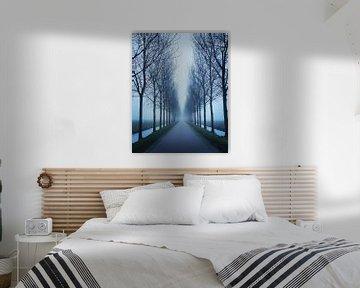 Bomen Symmetrie van Niels Krommenhoek